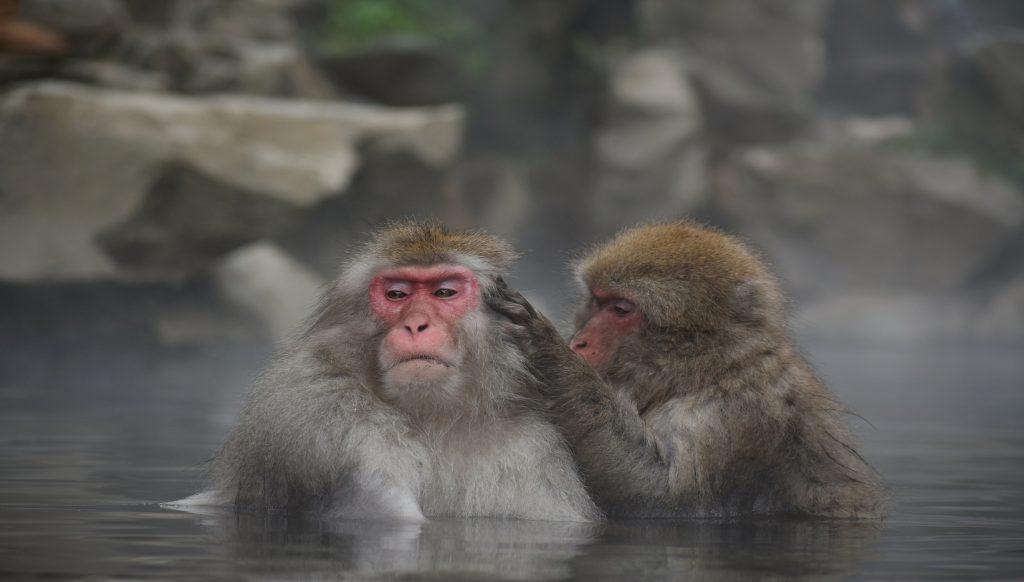 monos balneario japón