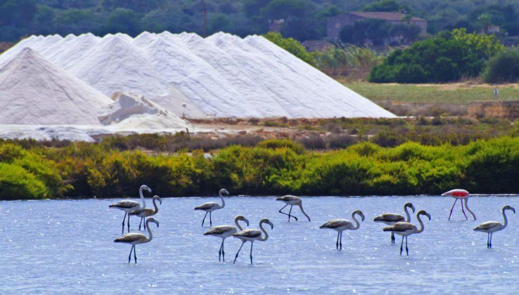parque natural Ibiza