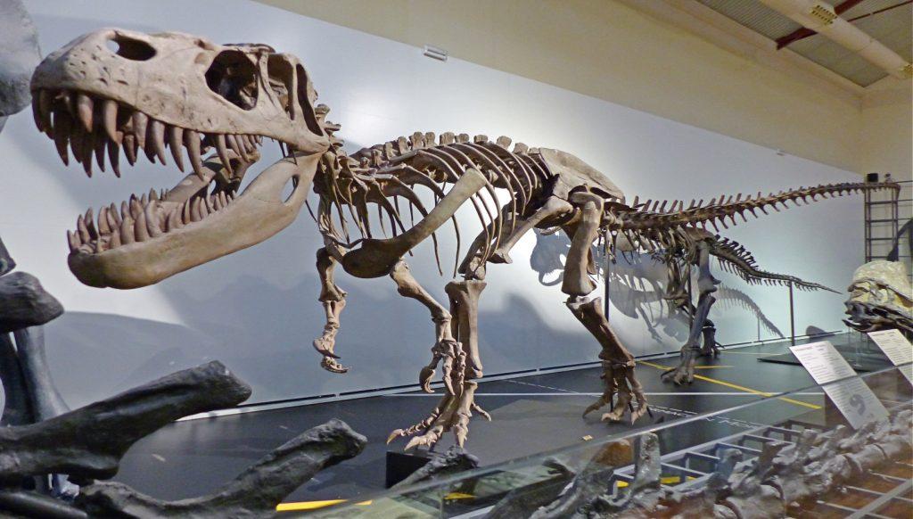 esqueleto de dinosaurio rex