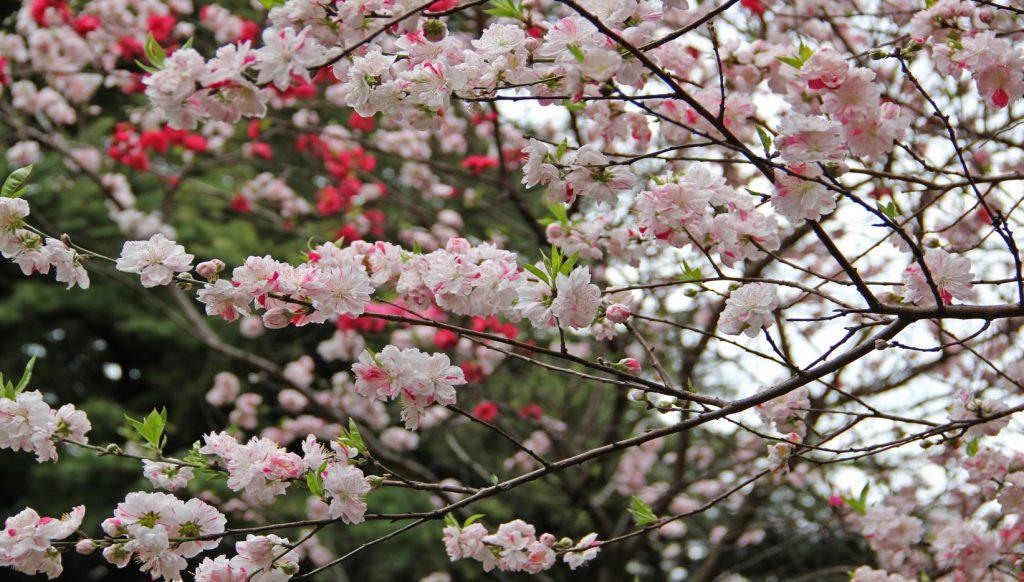 japón primavera